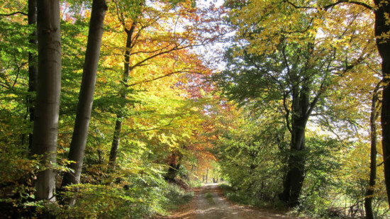 Waldweg im Ith